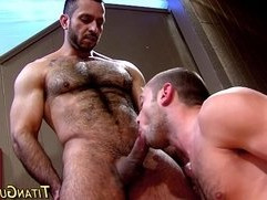 Hung bear gets rod sucked